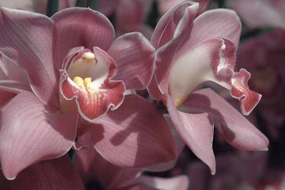 National Orchid Garden in Singapore