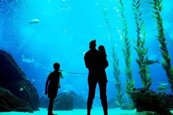 Discover over 8,000 sea creatures from 500 different species in Lisbon Oceanarium