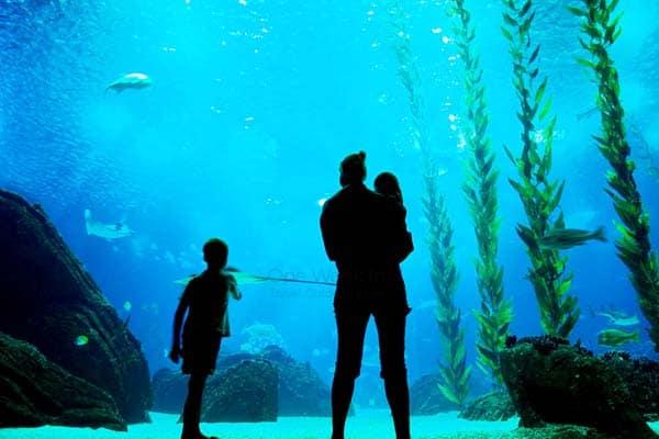 Discover over 8,000 sea creatures from 500 different species in Lisbon Oceanarium