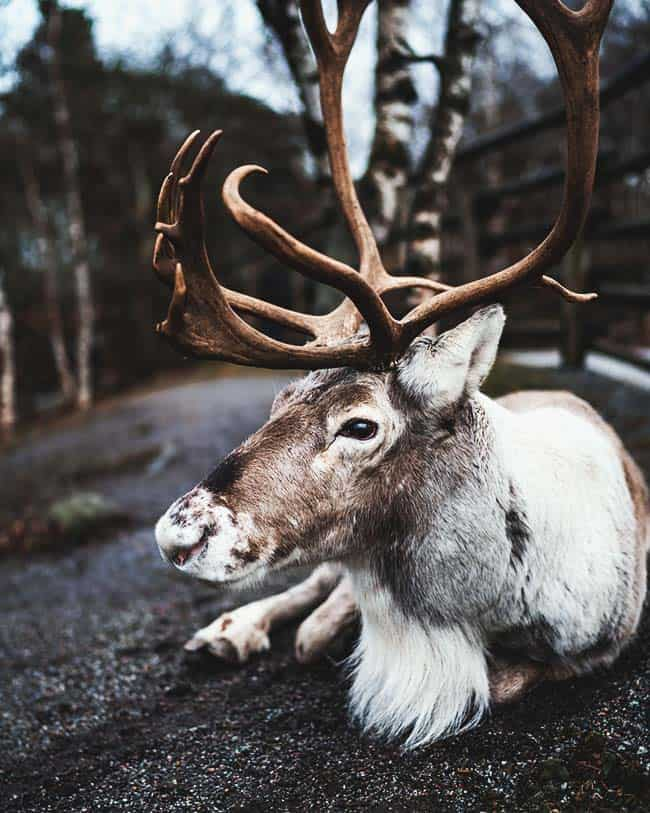 Wildlife in Stockholm