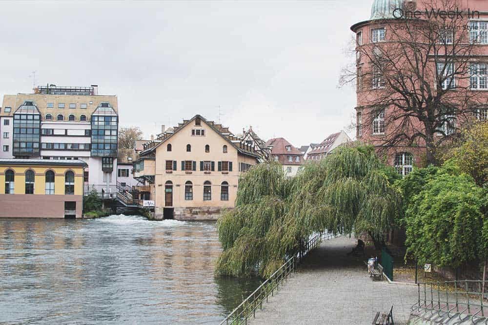 Under the tree Strasbourg