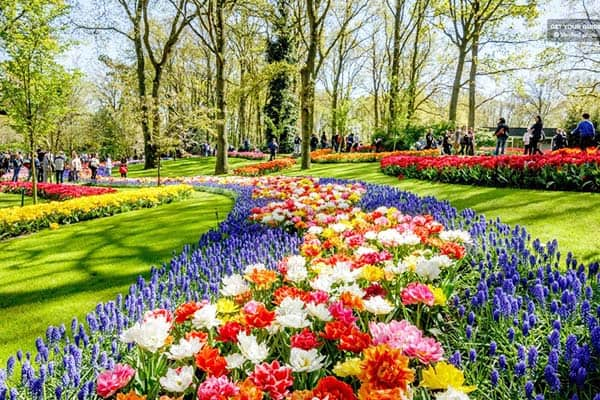 Stop and smell the tulips in Amsterdam