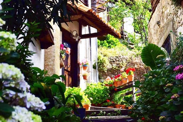 Enjoy the beautiful flowers around Mogarraz Spain