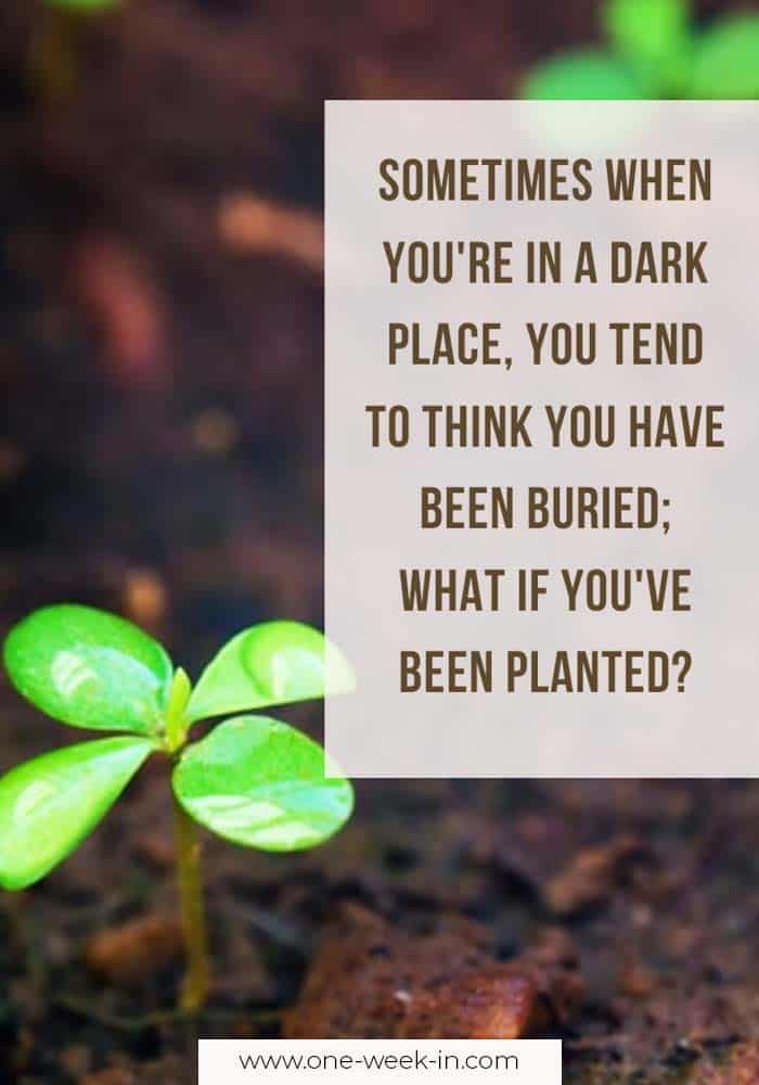 Sometimes when you're in a dark place, you tend to think you have been buried; what if you've been planted