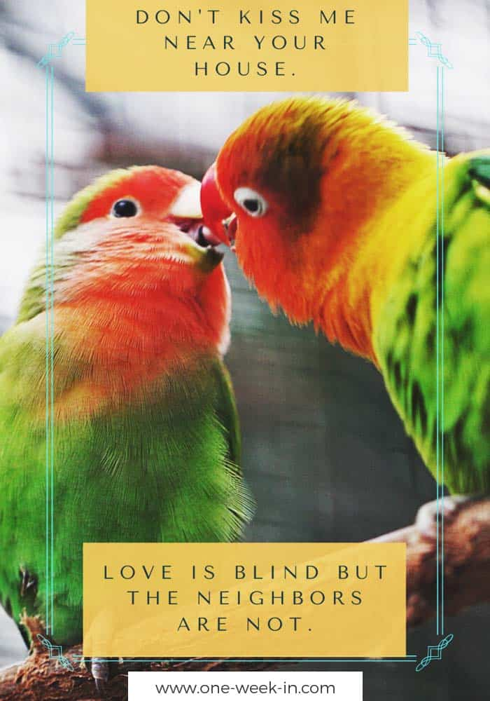 Don't kiss me near your house. Love is blind but the neighbors are not.