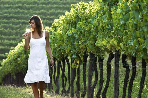 Visit Vienna's vineyard and have a taste of its delicious wine