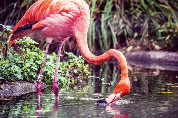 Take a photo of the beautiful flamingos in Vienna Zoo