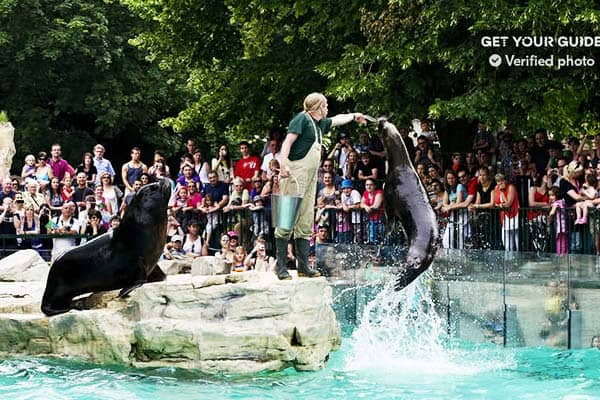 Marvel at the smart sea lions at Vienna Zoo