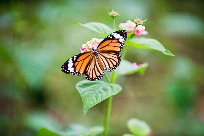 Le Carbet Amazonien butterfly farm